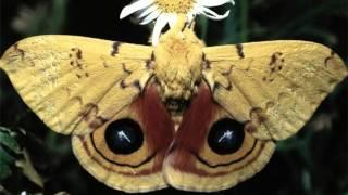 Danyel Gérard - Butterfly.mpg