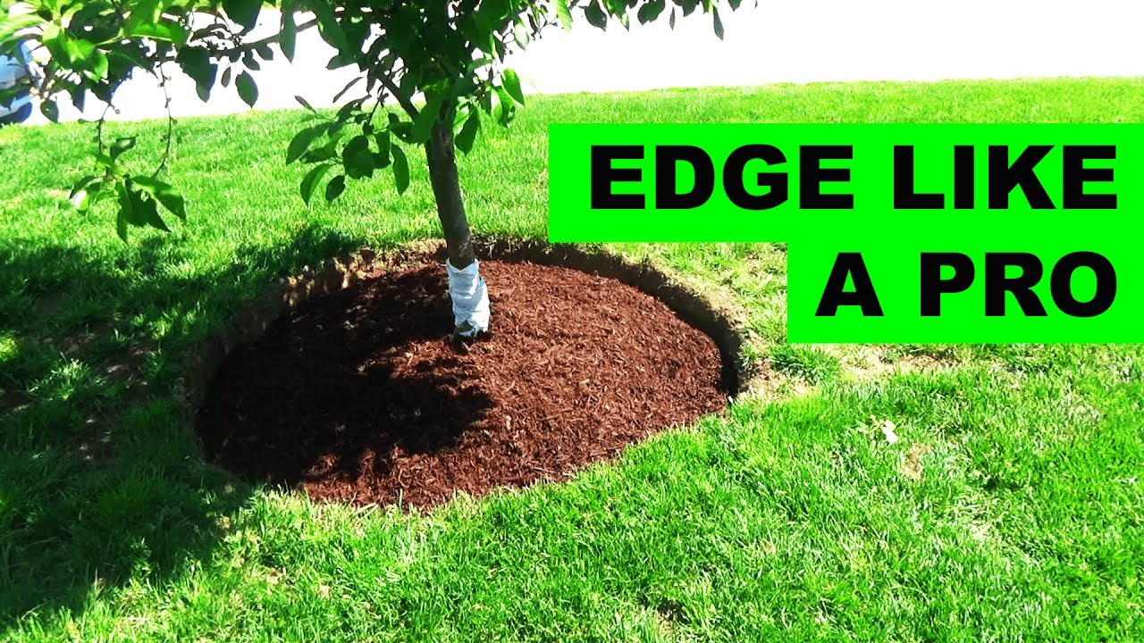 how to edge and mulch around a tree
