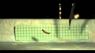 Mosquitofish springt zelf uit het water