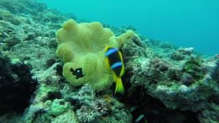 Fiji clip