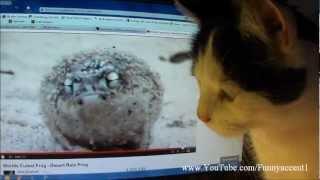 DESERT RAIN FROG WANTS CAT IVAN'S TREAT