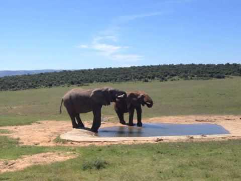 dobbernationLOVES Addo Elephant National Park South Africa