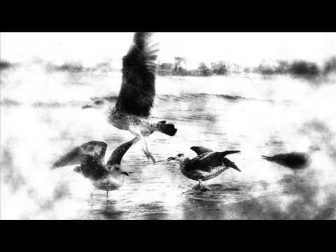 blueneck-sirens-2013-polllkaaa