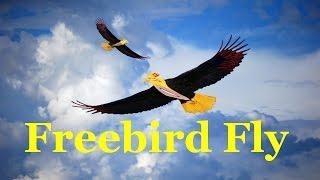 Andy B. Free - Freebird Fly - Soft Rock - Album - Code Name: Freebird
