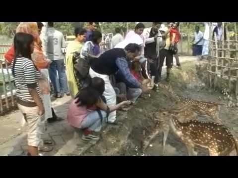 Sundarban-UNESCO World Heritage Site In Bangladesh (HD)