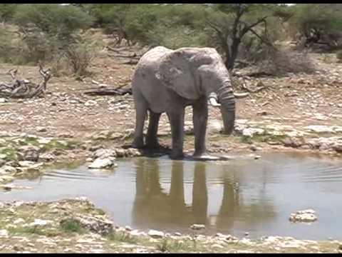 Wild Safari Africa