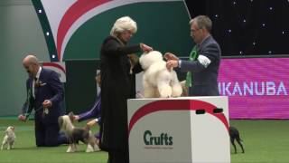 Crufts 2017 | Best of Breed winner Michael Coad and bichon frise Magic
