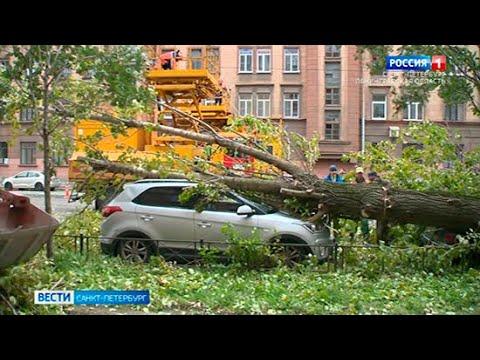 Поваленные деревья и светофоры: в Петербурге бушует шторм