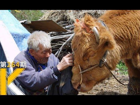 韩国获奖纪录片:这头牛整整活了40年。 牛铃之声 워낭소리