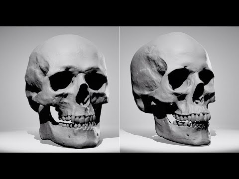 THERE ARE ONLY TWO TYPES OF SKULLS