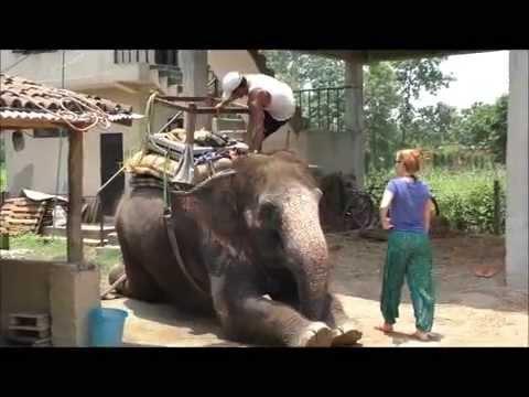 Welt-Sicht Projekt: 341017 - Elefantenpflege in Nepal