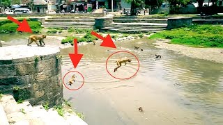 Monkeys cliff jumping into river !?! 💦 🙊 🙈 🙉 💦 🏊