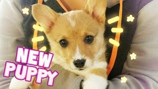 I GOT A PUPPY! 🐶💜
