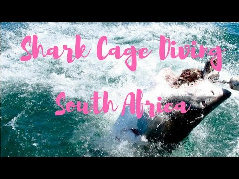 Shark Cage Diving | South Africa