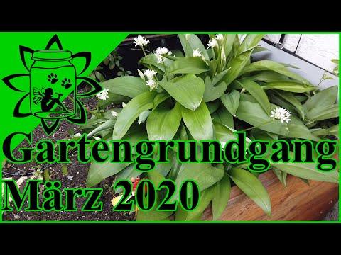 Gartenrundgang März 2020   Garten im Frühling   Die Gartensaison beginnt  Garteneinkochfee