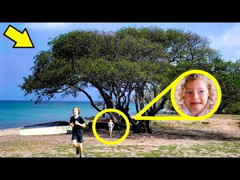 Se você vir essa árvore, corra rápido e peça ajuda!