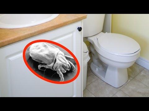 Allergist explains best way keep bathroom clean