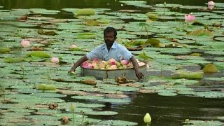 Lotus pickers in Nagercoil, Tamil Nadu, India