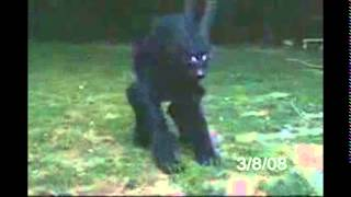 PRUEBA FALSO LOBIZÒN PARAGUAY / CORRIENTES video original 1&2
