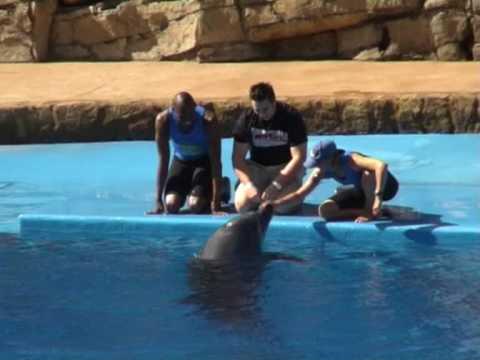 Delfiny w oceanarium w Durbanie 4/5