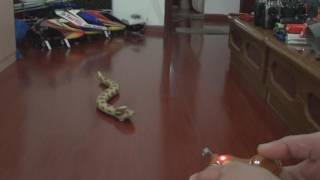 RC Rattle Snake Crawling video
