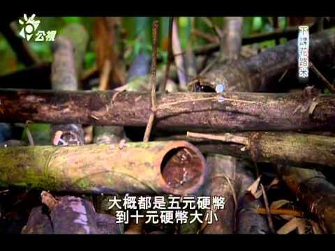 20140505[下課花路米]螢火蟲 - YouTube