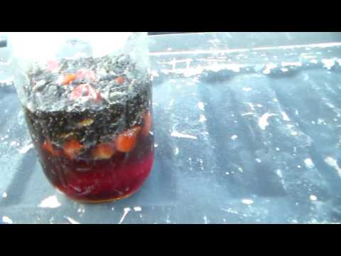 The cheapest, best, homemade fly trap you can build.