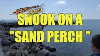 Jetty Snook Caught on Live Bait in Fort Pierce Florida
