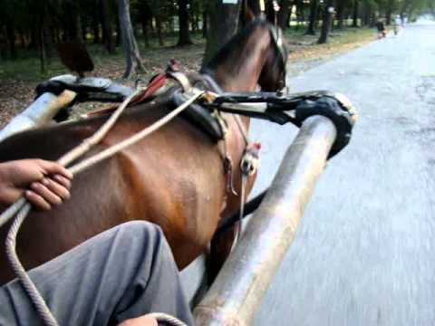 Horse Cart Ride in Nepal India border