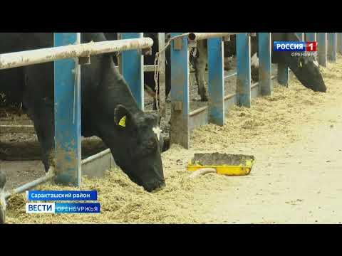 В селе Красногорский Саракташского района начато строительство новой молочной фермы