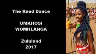 The Zulu Reed dance 2017 width=
