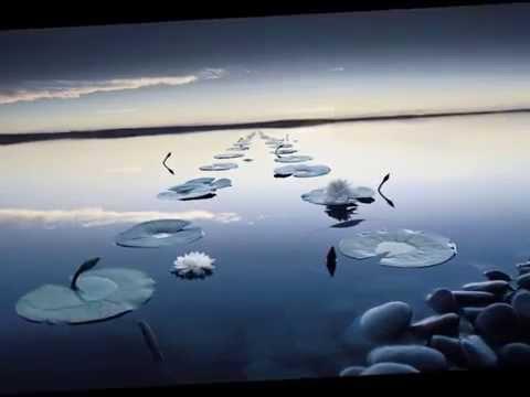 Le silence du lac ::
