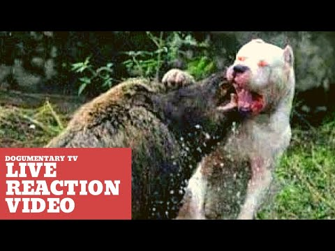 15 GUARD DOGS YOU DON'T WANT TO MESS WITH - LIVE REACTION