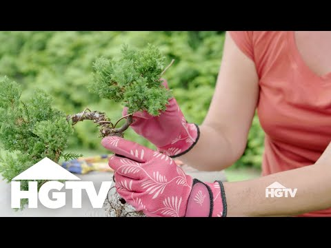 Garden Love | DIY Bonsai Basics - HGTV
