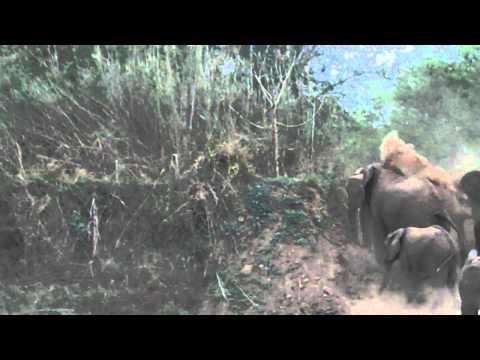 South African Safari–Elephants Dust-bathing