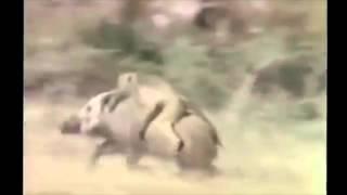 Μαϊμού με χιλιάρα μηχανή και θάνατο