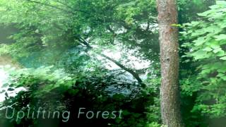 [Progressive House] Uplifting Forest (Original Song)