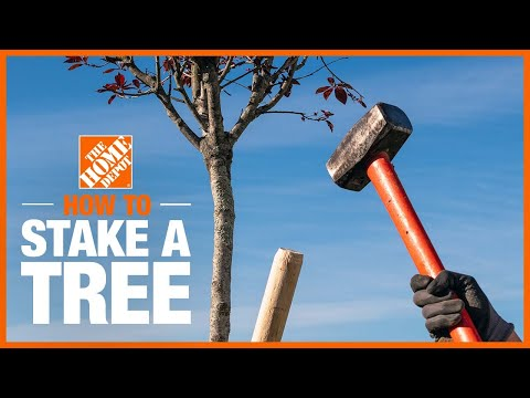 How to Stake a Tree