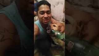 Bruno mars cachorro de familia