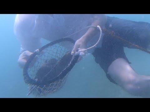 Dubai'de geleneksel inci avcılığı nasıl yapılıyor?