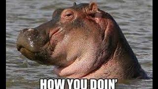 Dancing Hippo Weighed Over 2.6 Billion kg