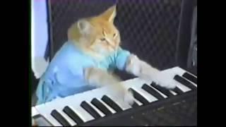Dr. Dre - Still D.R.E. ft. Pianist Cat