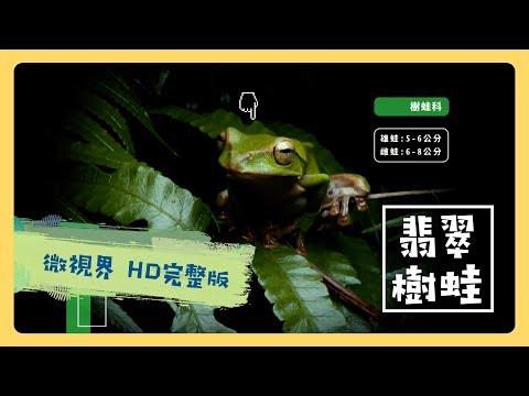 翡翠樹蛙 - 公視 《台灣特有種》微視界HD版 Episode#2