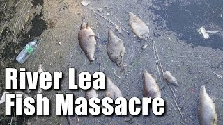 River Lea Fish Massacre
