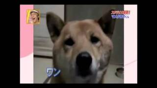 Soft Dog(Eng Subtitles)