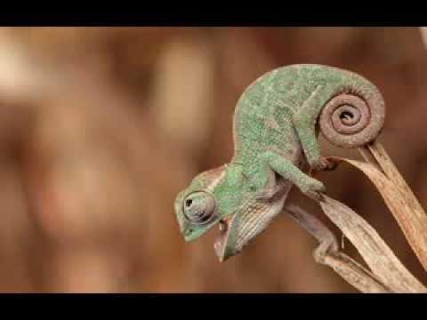 herbie-hancock-chameleon-short-version-armrebel