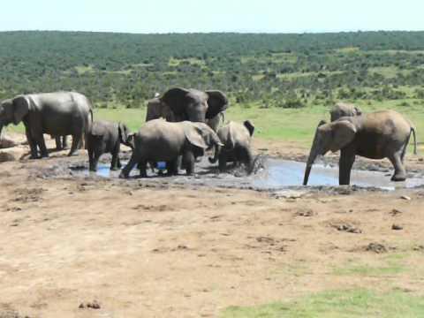 Elephants @ water hole.MOV