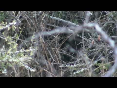 GSC 0705 – lion cubs – Shawn & Silmiya Hendricks