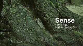 Sence  [Solfeggio 528Hz]