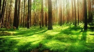 Relax TV - Sons da Floresta Para Acalmar o Corpo e a mente